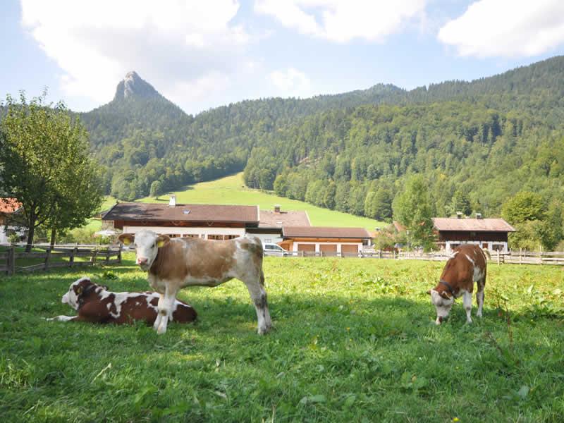 Leonhardstein (1.449m)